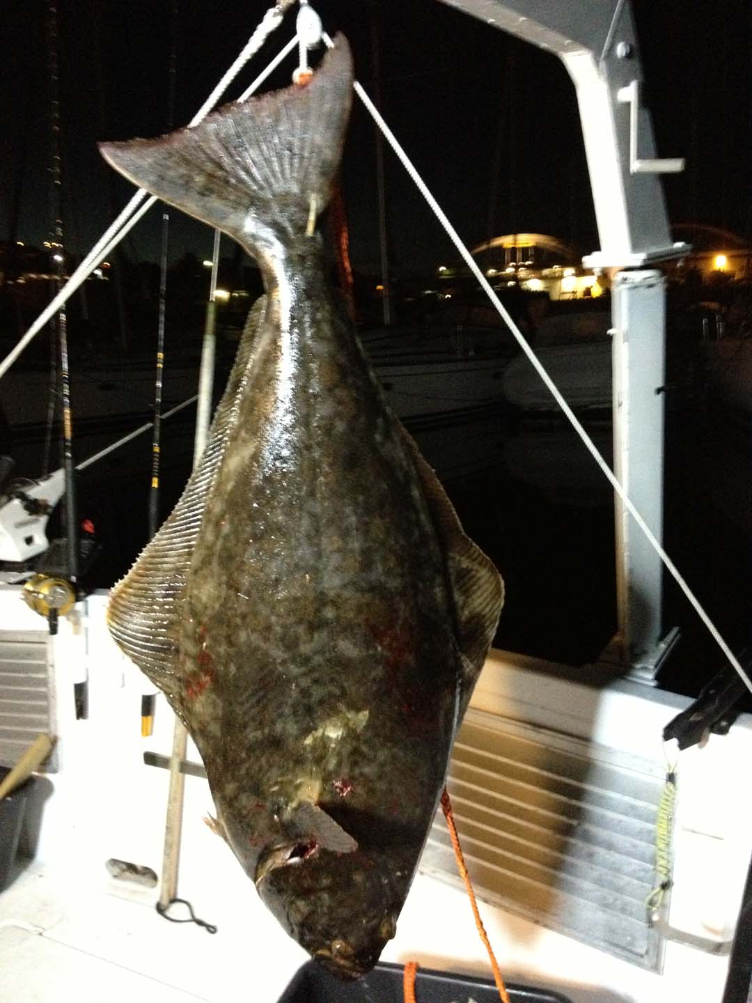 Picture of deep sea fishing