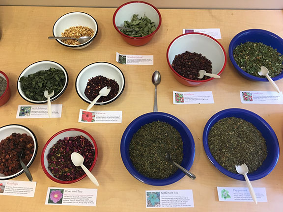 Teacher Training - Wild Food Traditions: Native Infusions & Power Snacks - CANCELLED