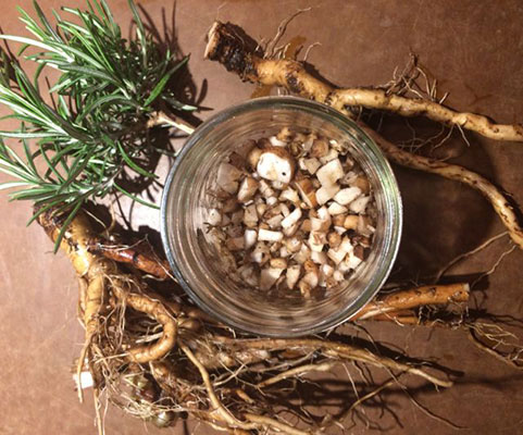dandelion root sliced into medallions and soaking in bowl of vinegar