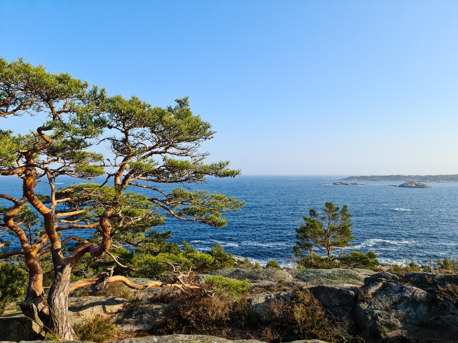 Utsikt til sjøen og et tre