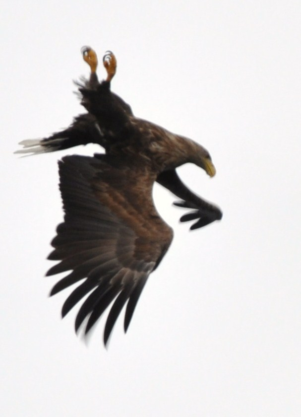 Foto- und Vogelsafari