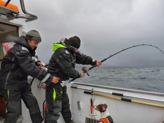 SPECIAL FOR THE SEASON SPORTFISHING TROMSØ -NORWAY