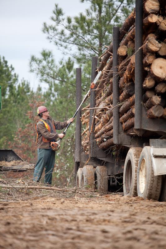Timber Purchasing - Cullman, AL | Drennen Forestry