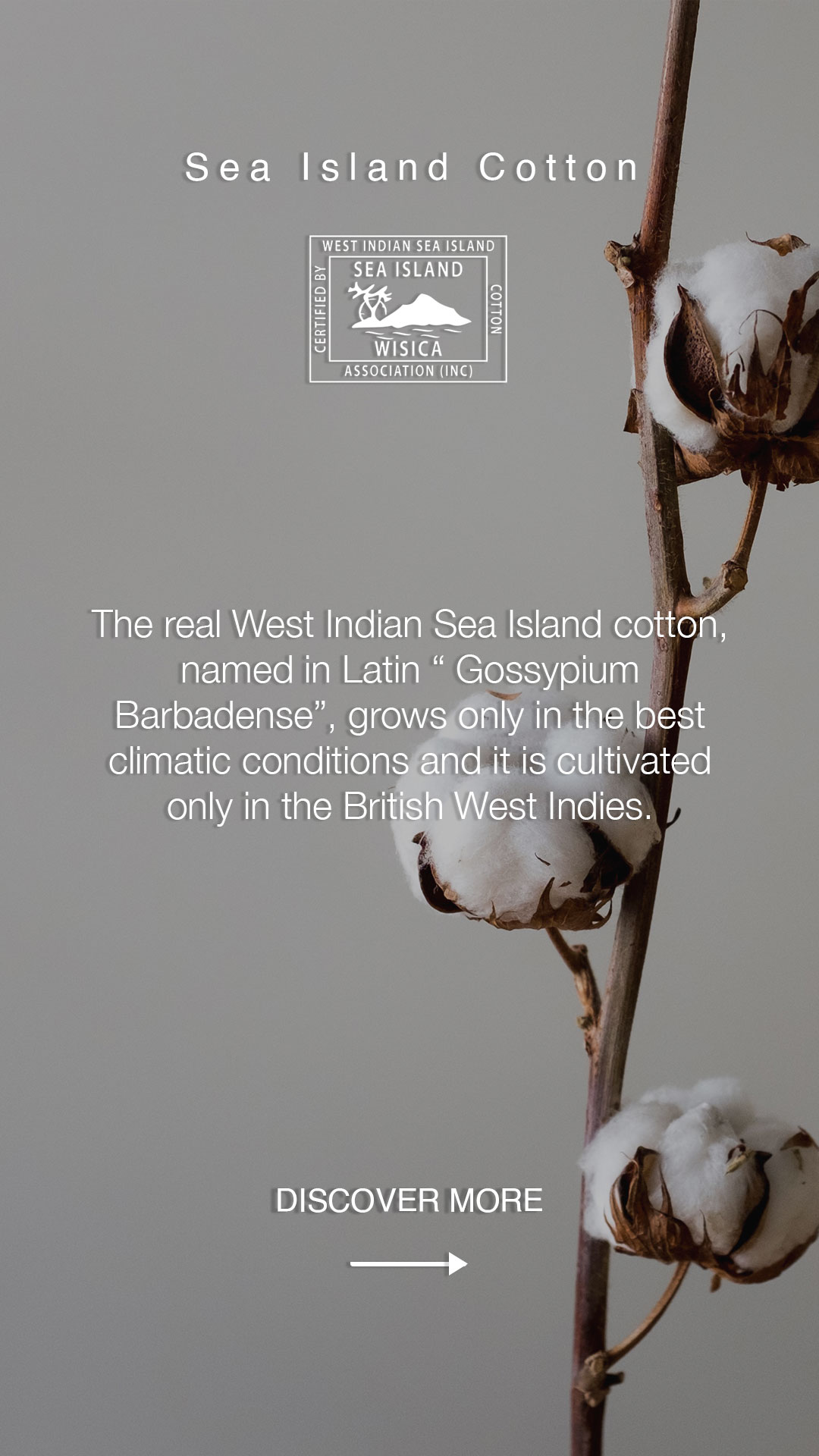 SEA ISLAND COTTON: A LOVE OF NATURE