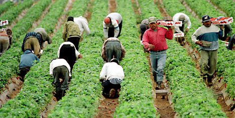 Department of Labor Sues Arizona Farm for Violating the Rights of Farm Workers