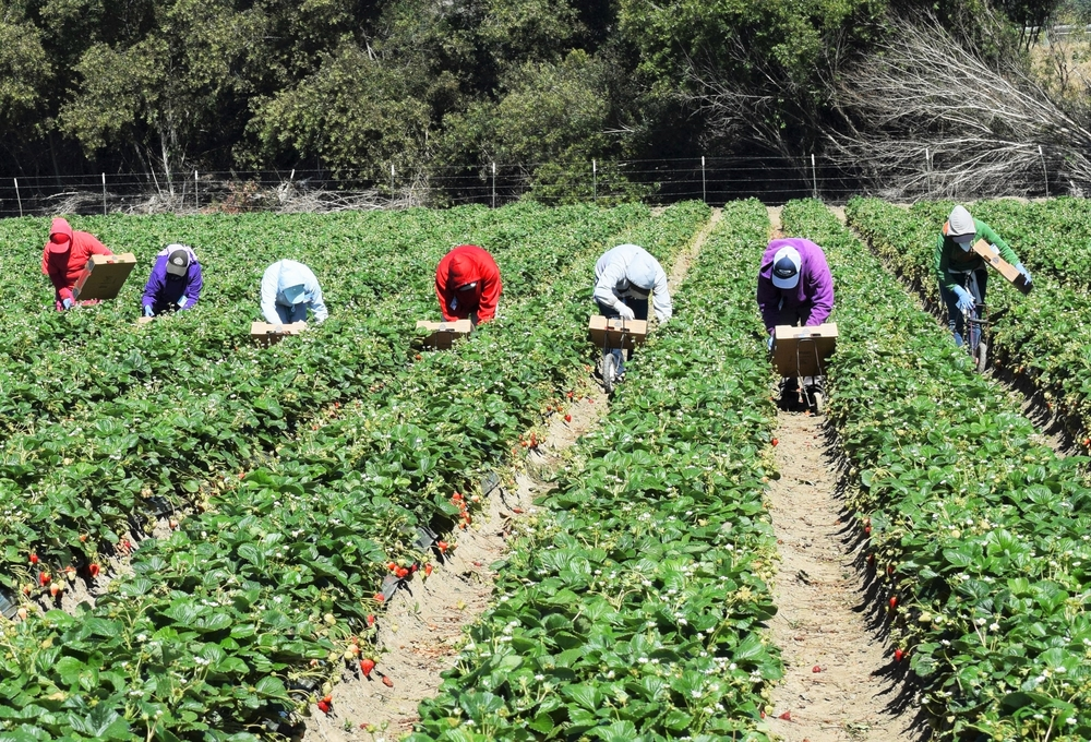 New York Farm Workers Entitled to Overtime Wages