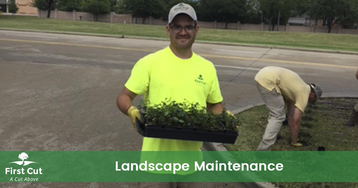 Fort Worth Landscaping Service