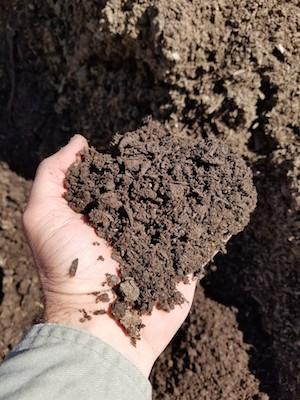 Mushroom Compost