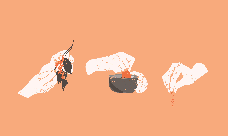Grafik mit 3 Motiven, Hände die Gewürzbeeren pflücken, Hände die einen Mörser betätigen, Hände die Gewürzpulver streuen