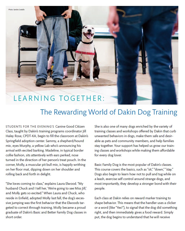 Dakin summer stories picture of article on page