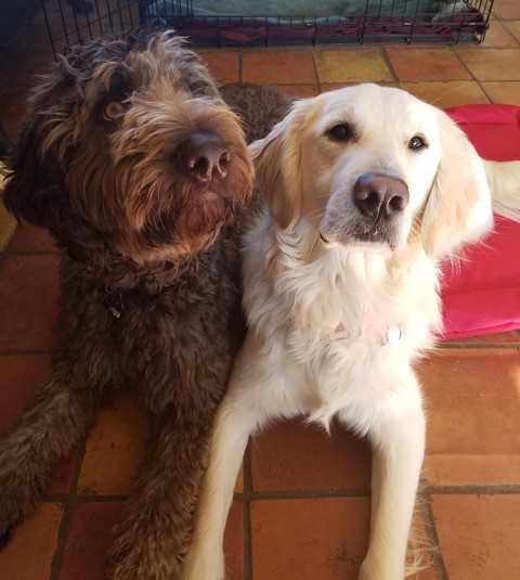 Teddy and Finnegan. Two successful students