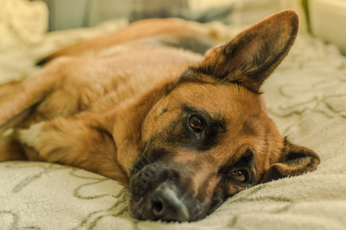 Sit & Stay - Training Sleepovers