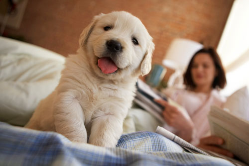 Puppy Training package