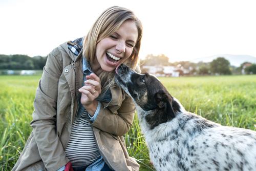 Family Dog Baby Prep Consultations