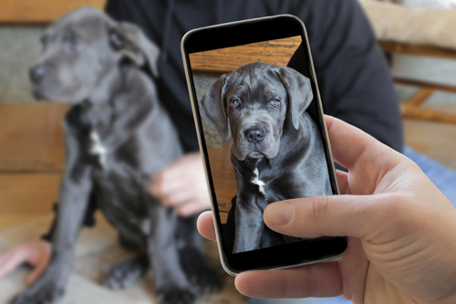 Virtual Dog Consults