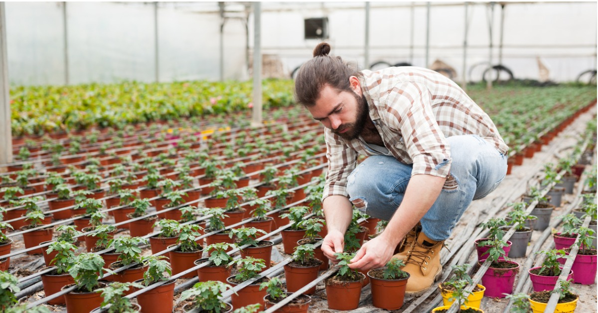 Young male farmer in greenhouse