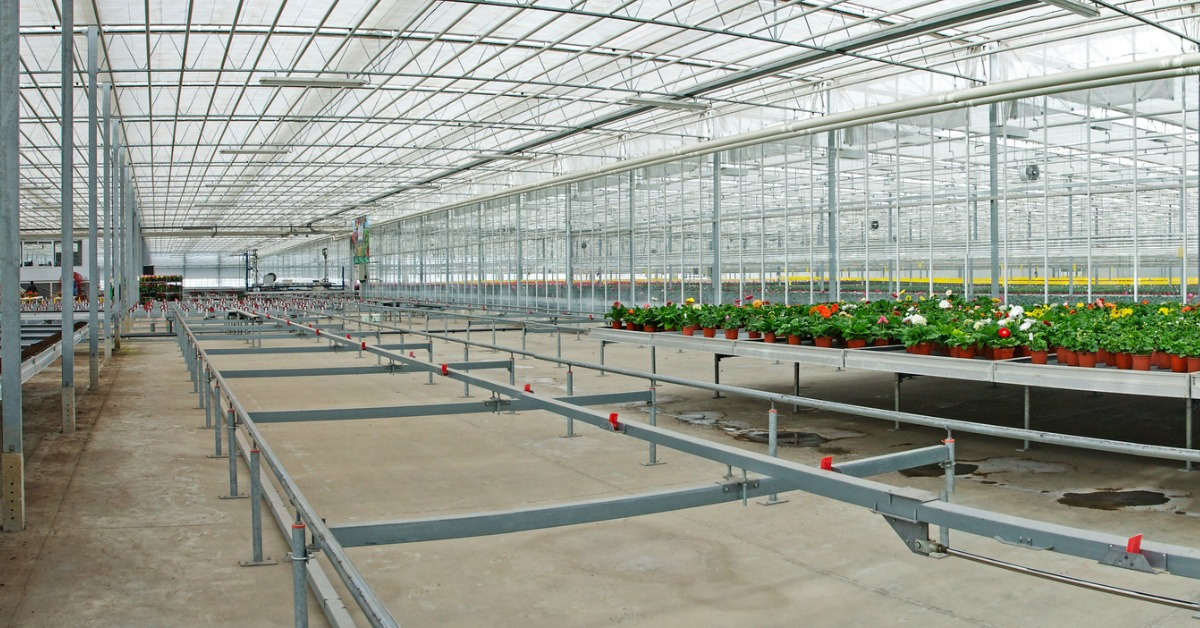 Commercial-greenhouse