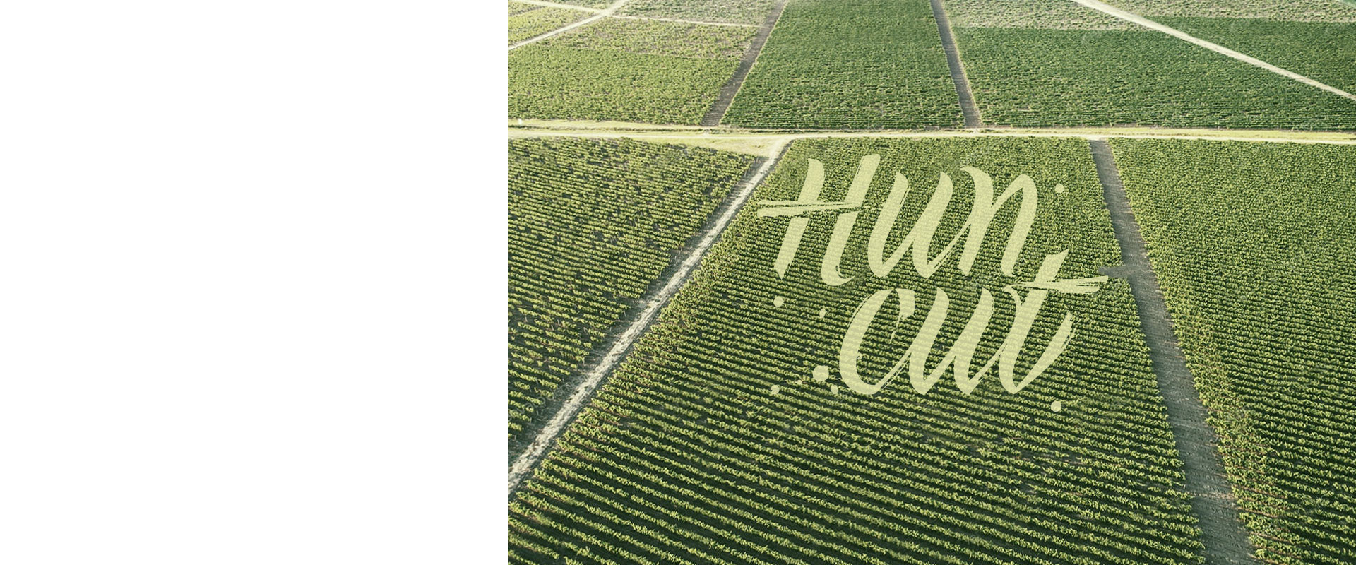 Huncut Logo Design