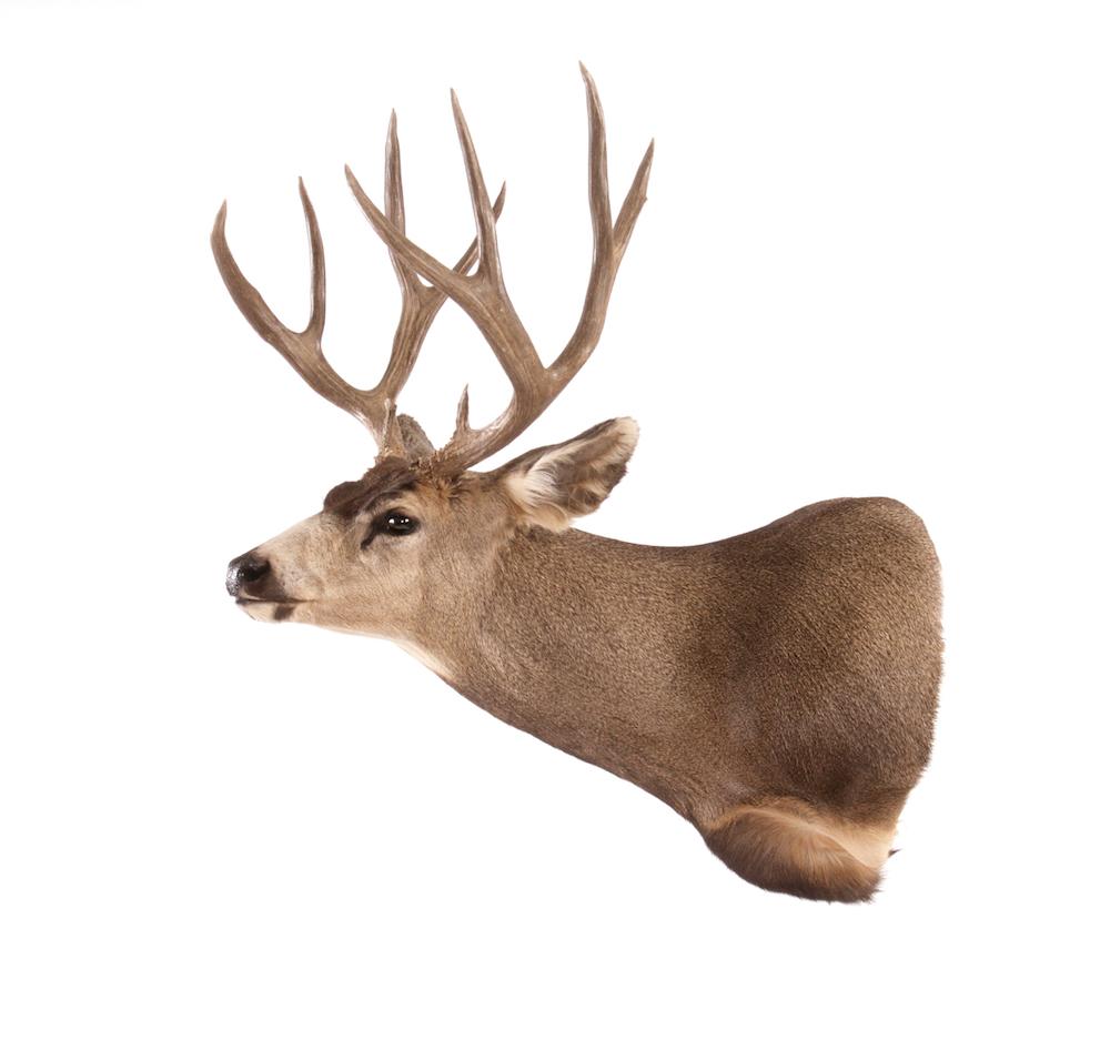 Whole Deer Carcass