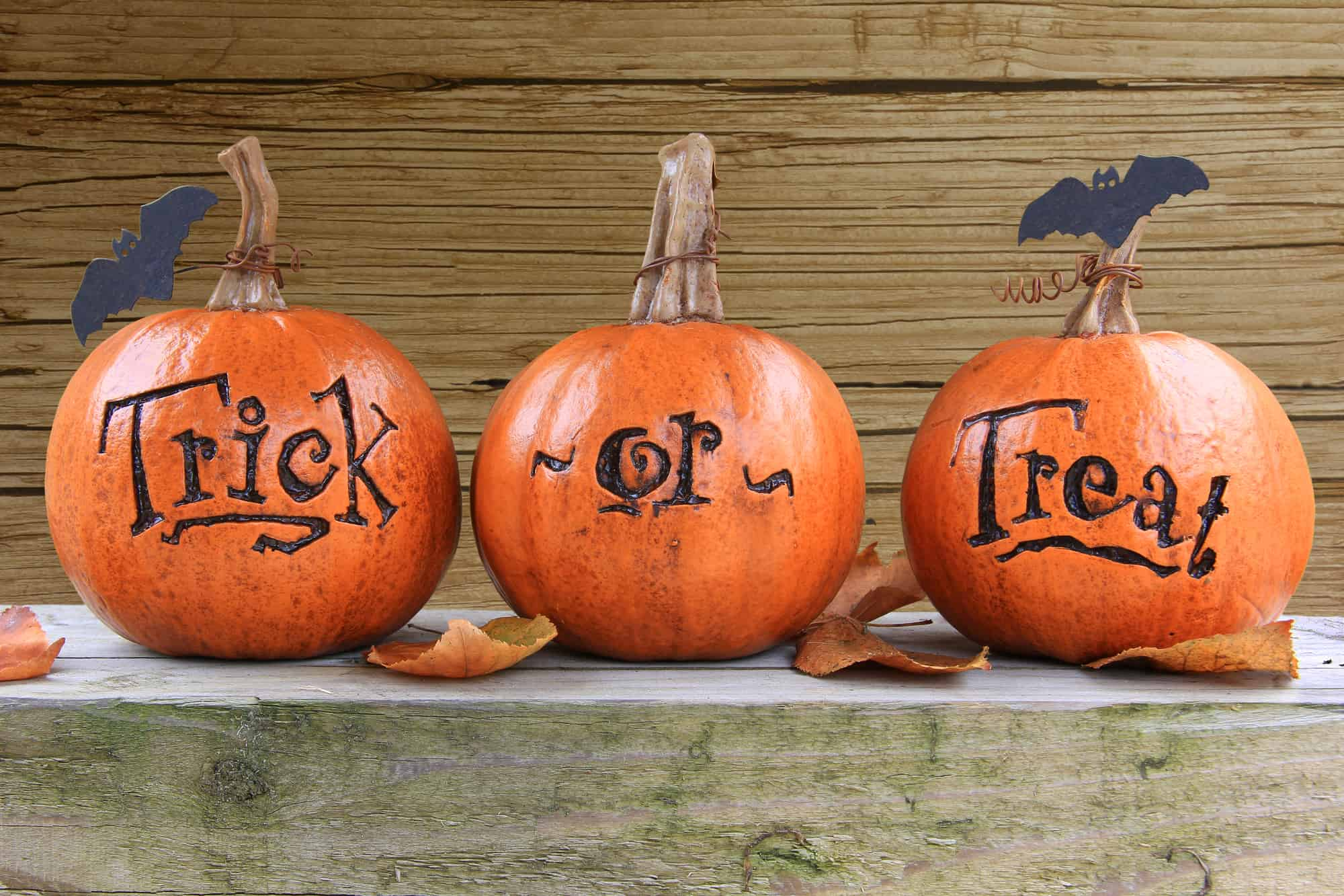 pumpkins that say trick or treat