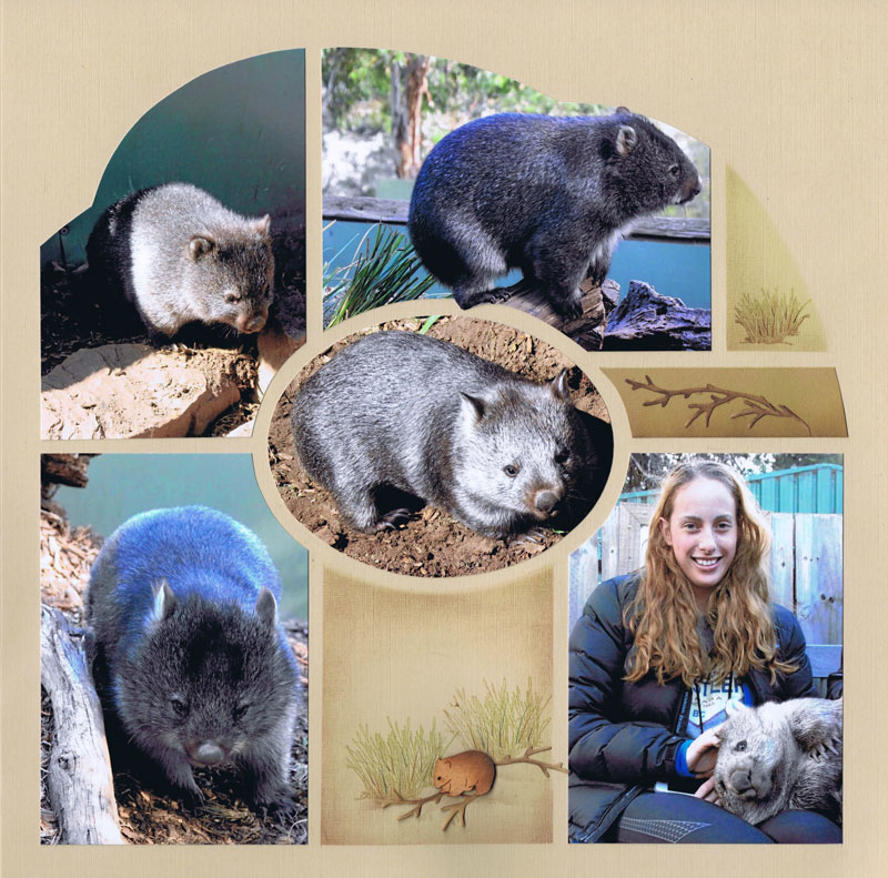 Boston - Wombat by Deborah Byrne