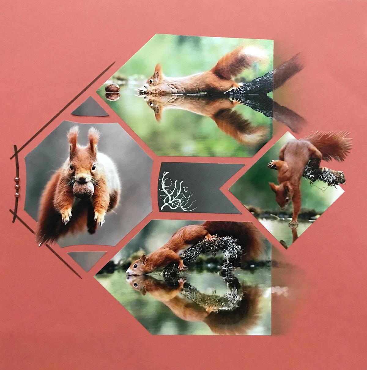 Squirrels by Barb Brown