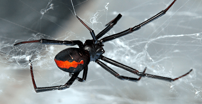 Common Spiders You Can Find in Singapore