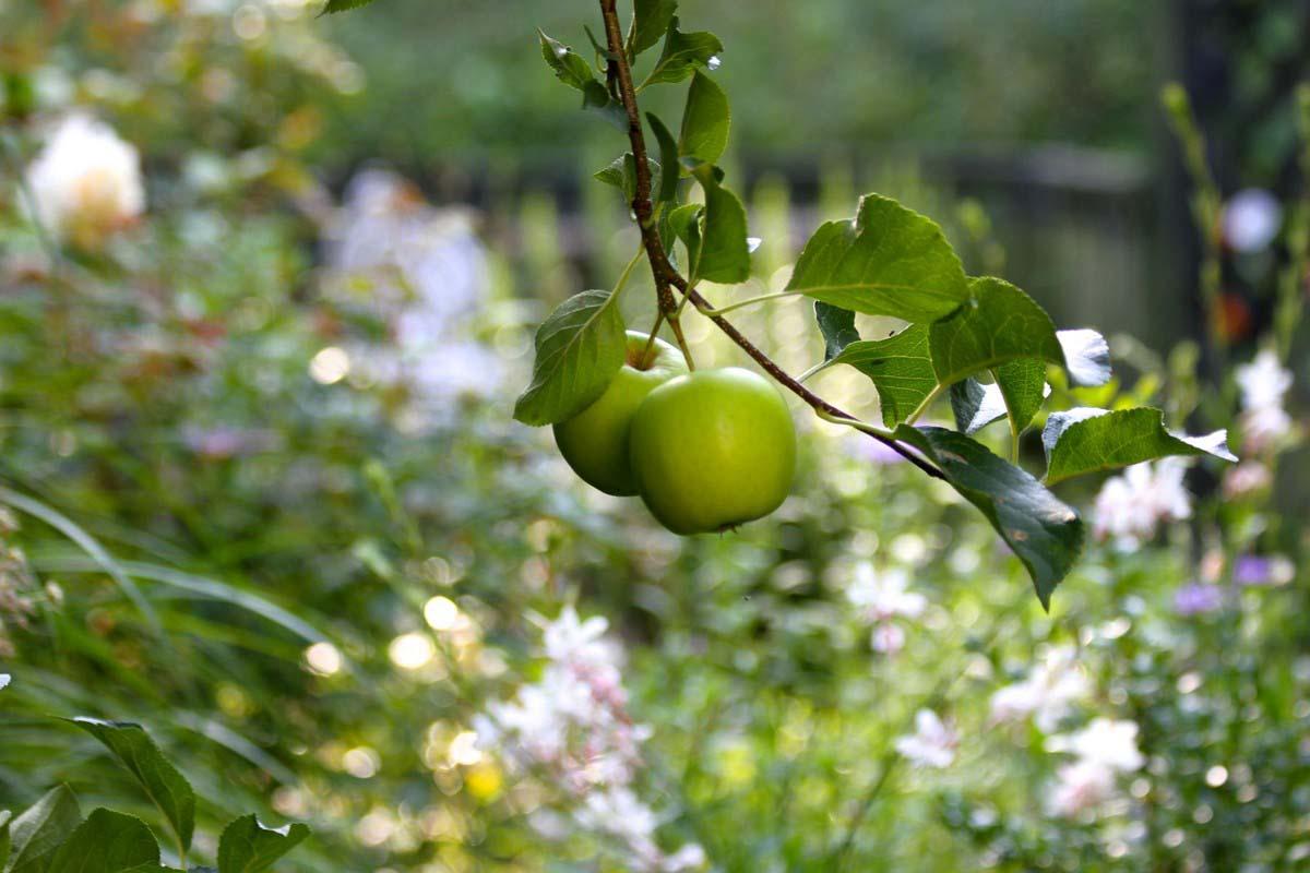 Tessa Hobbs - Fruitfulness - Garden and Design
