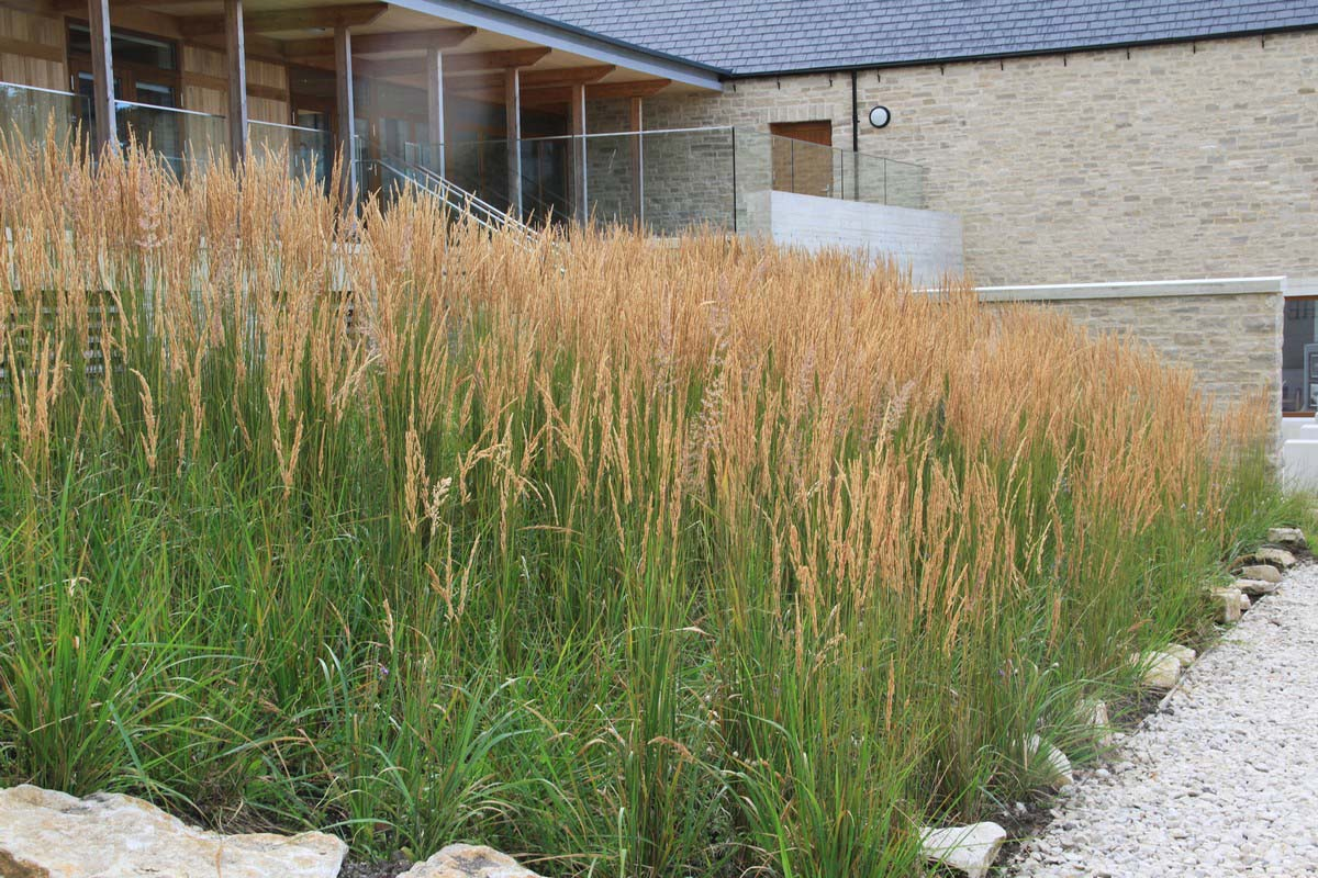 Tessa Hobbs - Fossil Museum - Garden and Design