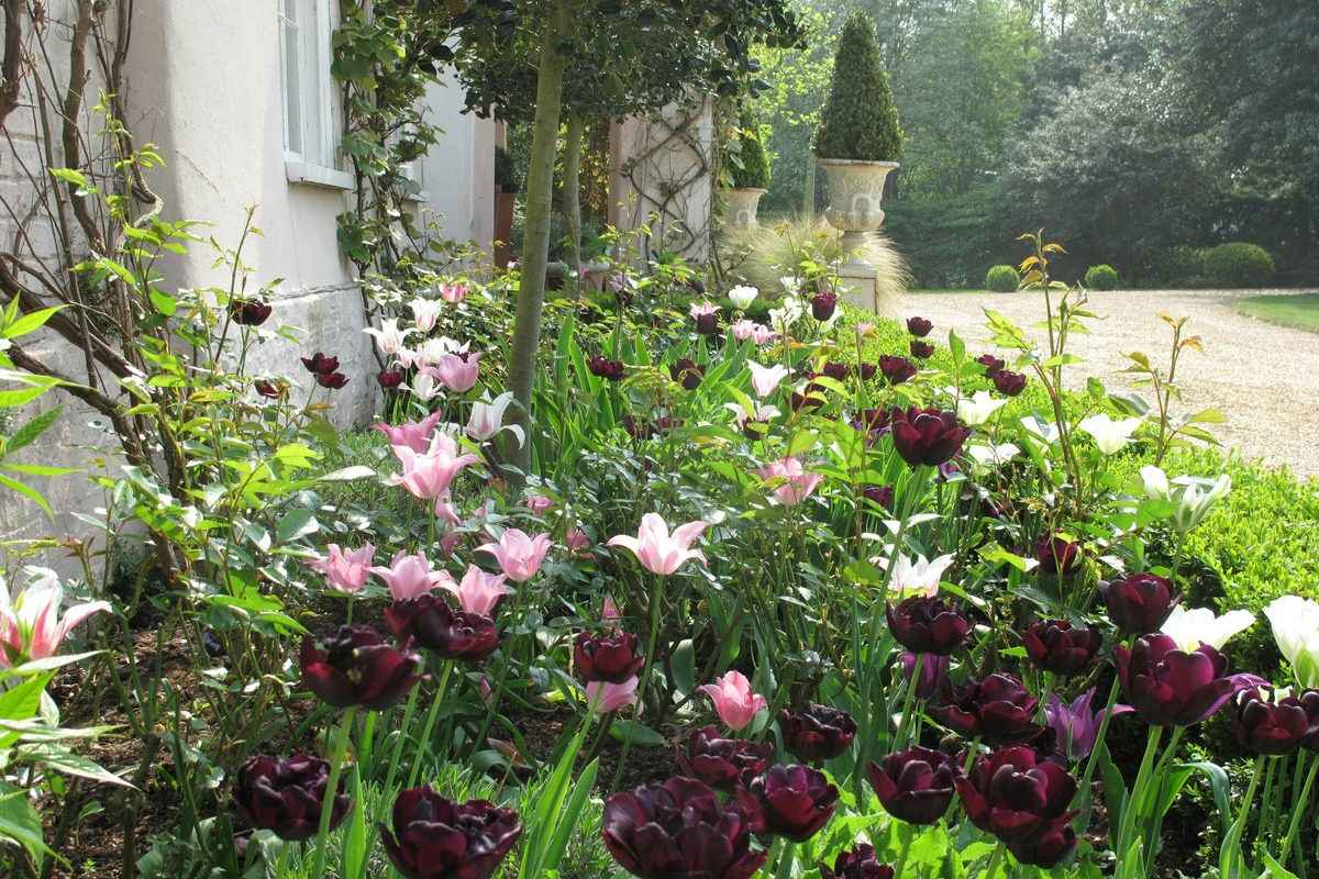 Tessa Hobbs - Old Country Garden | Garden and Design
