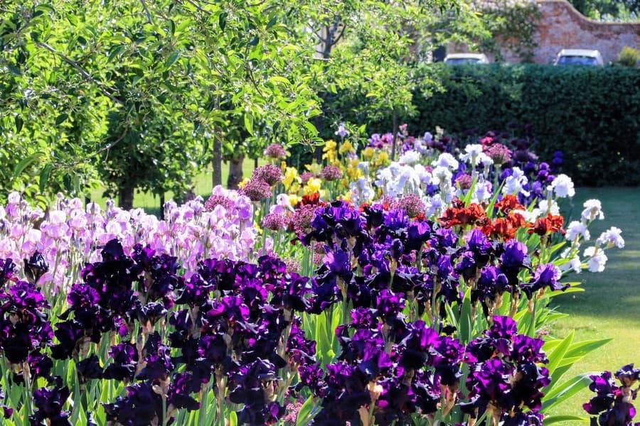 Tessa Hobbs - A Manor House Garden and Design