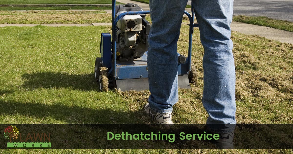 Lawn dethatching service
