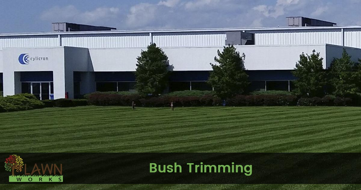 bush trimming service