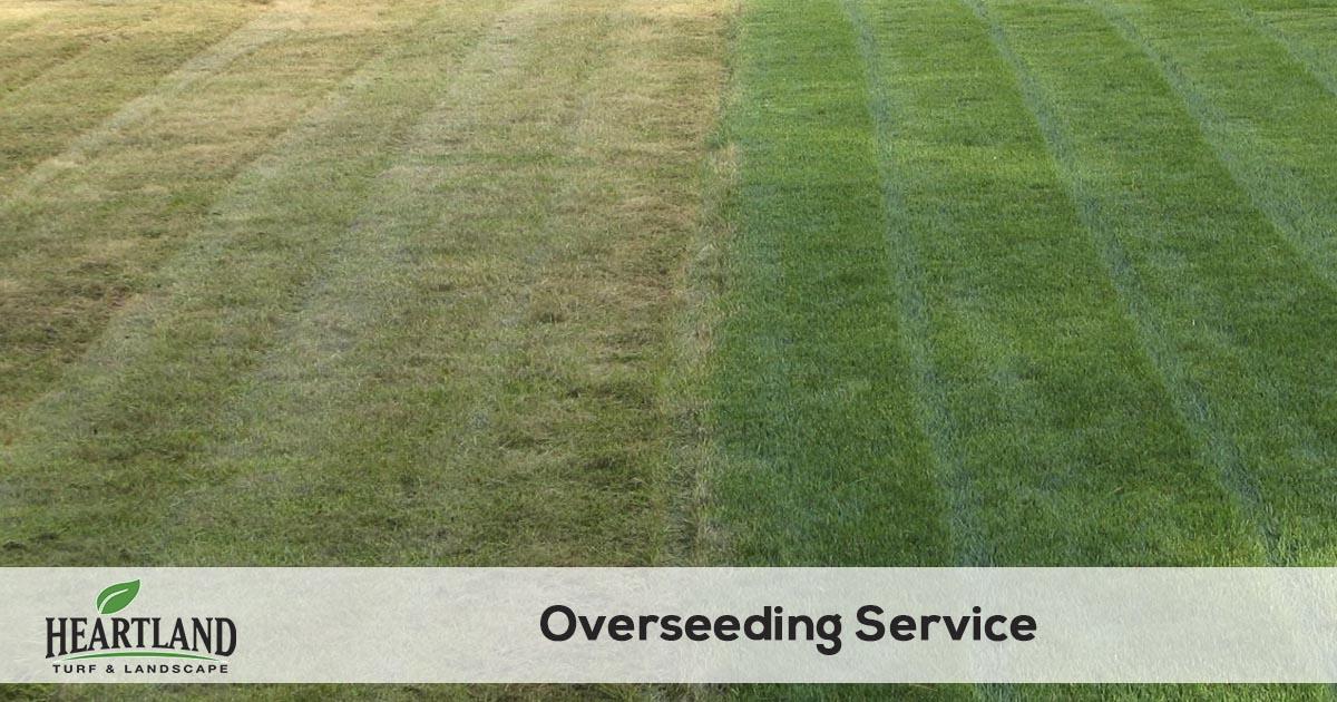 Lawn Overseeding Service Heartland Turf Landscape