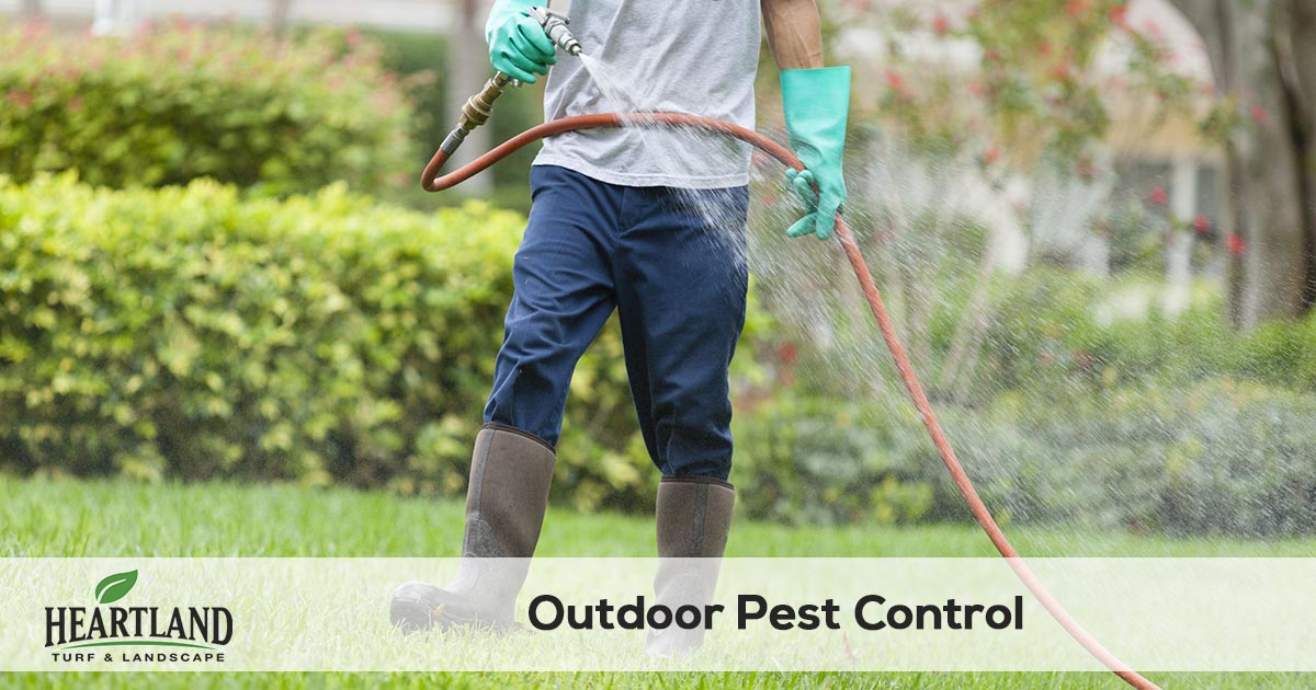 outdoor pest control and spraying