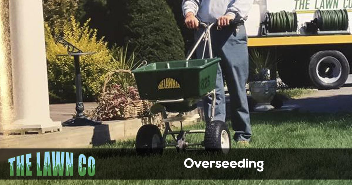 Lawn overseeding in Cape Cod