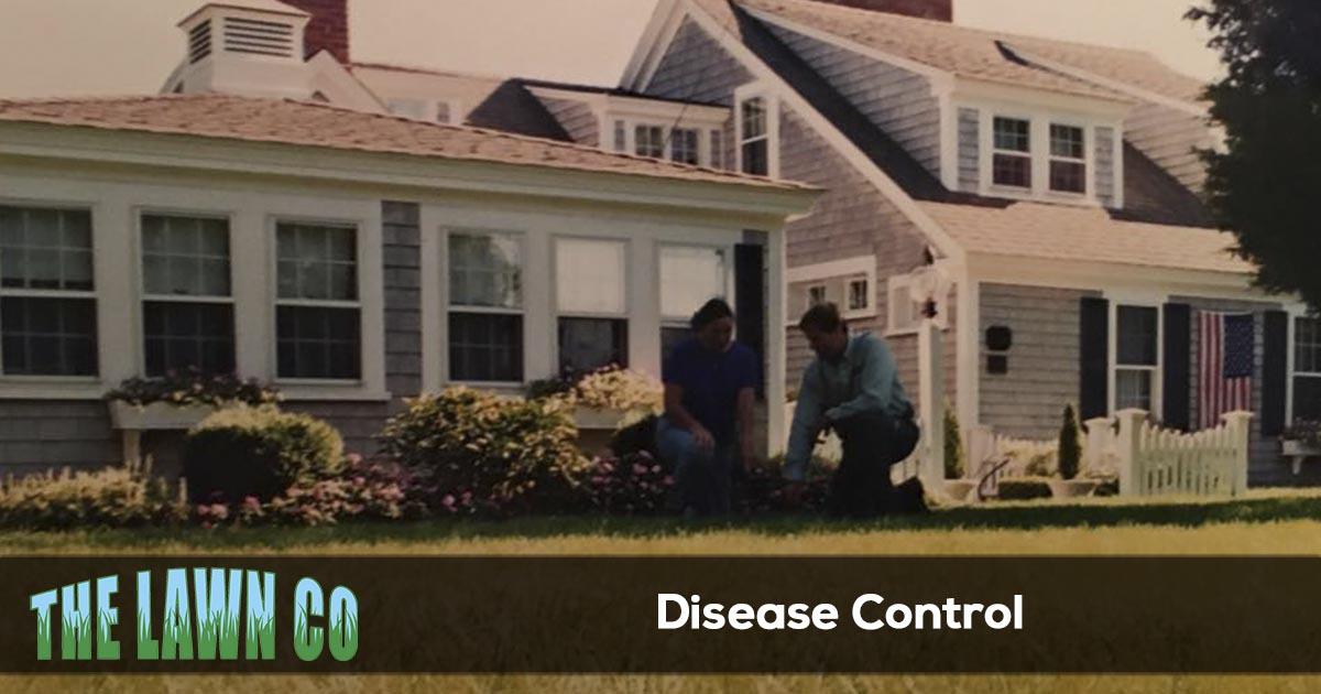 Plant Disease Control in Cape Cod