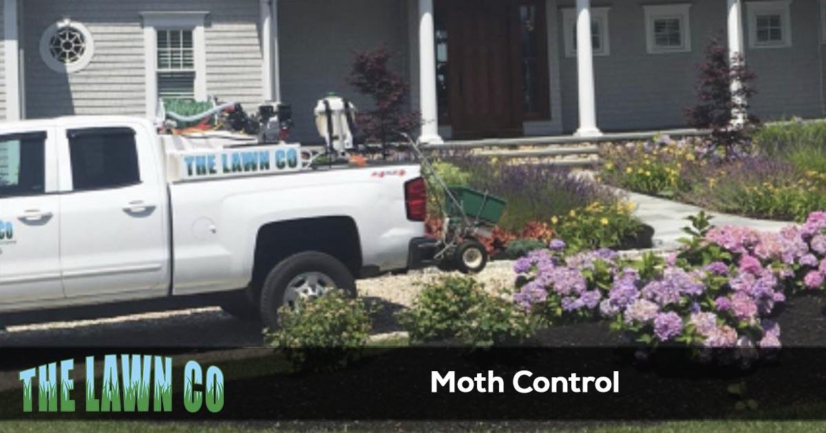 Moth control service in Cape Cod