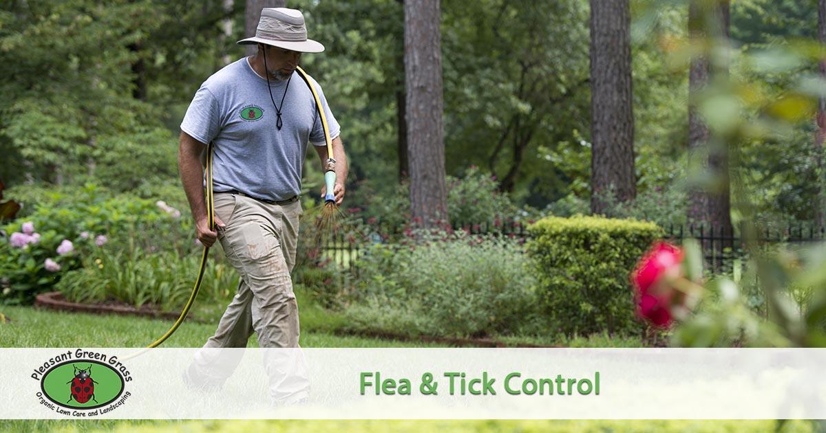 flea and tick spraying