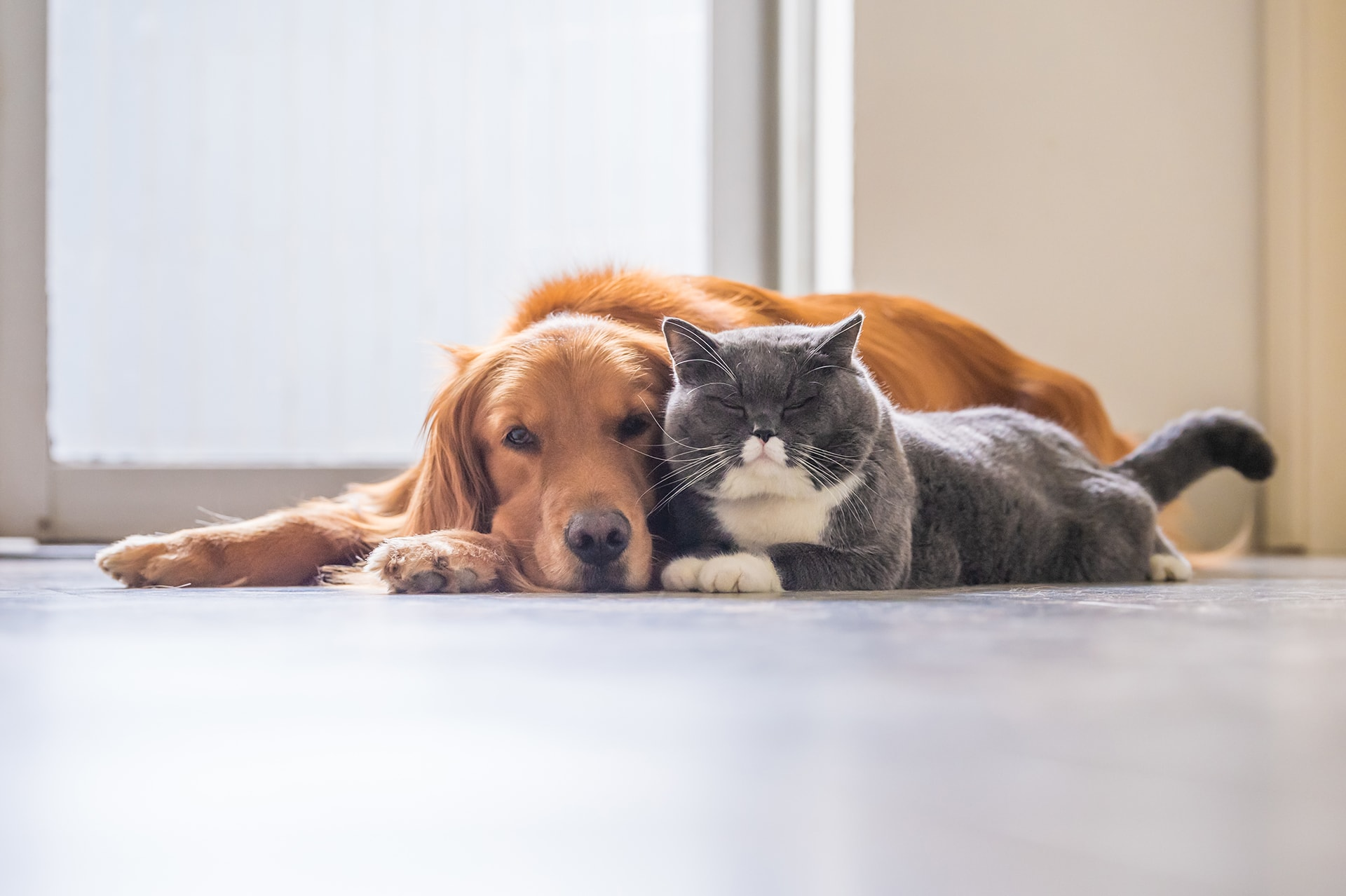 Communication Animale Intuitive - Suivre sa Joie