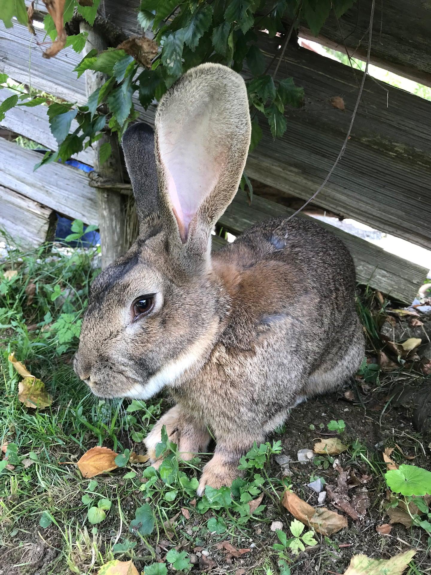 Blog Lifestyle - Un petit lapin d'Adelboden  - Suivre sa Joie - Saskia Parein