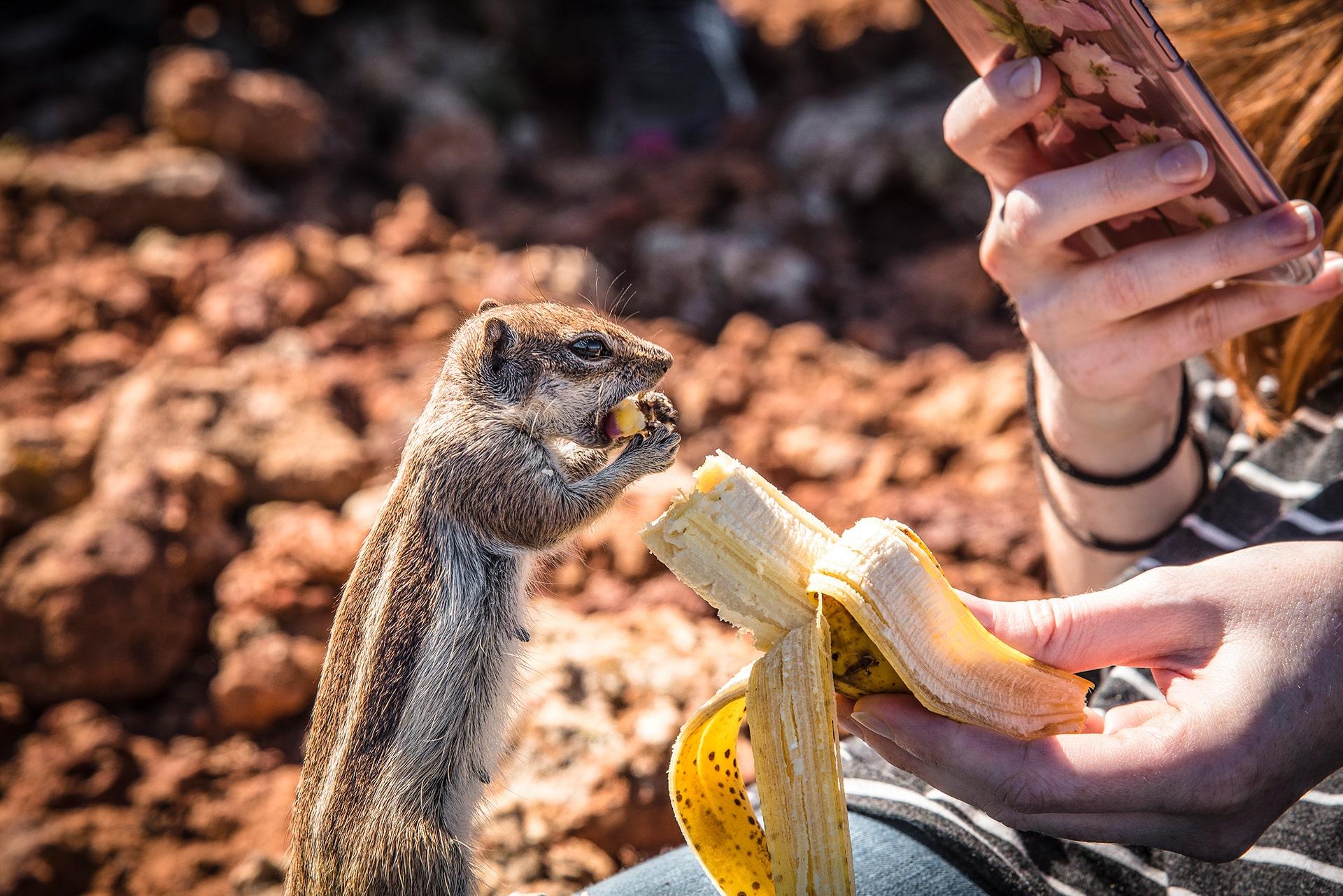 Blog Lifestyle - Un adorable écureuil - Suivre sa Joie - Saskia Parein