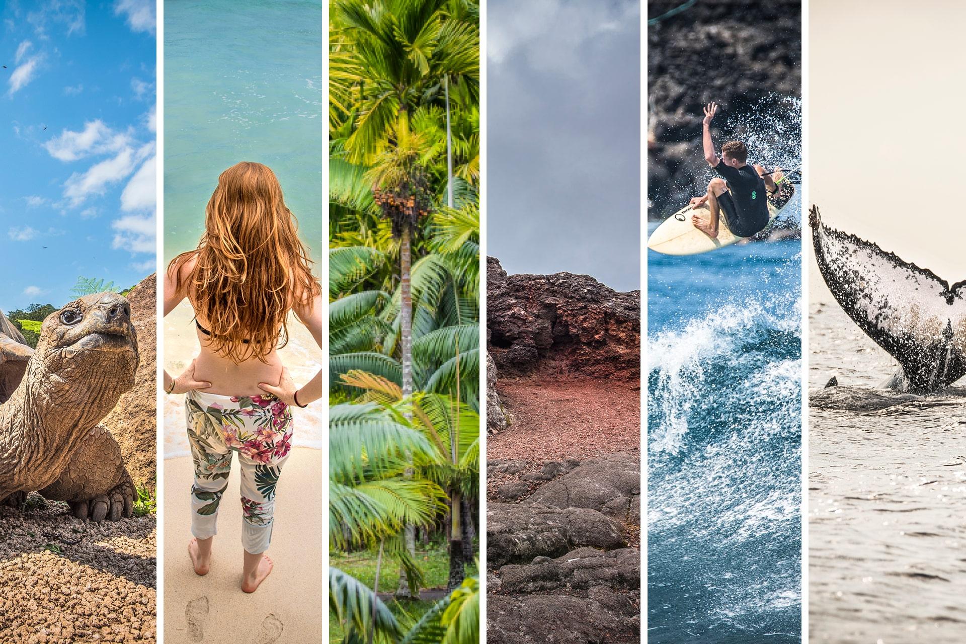 Le duo de choc ! L'île Maurice et l'île de la Réunion - Suivre sa Joie - Saskia Parein