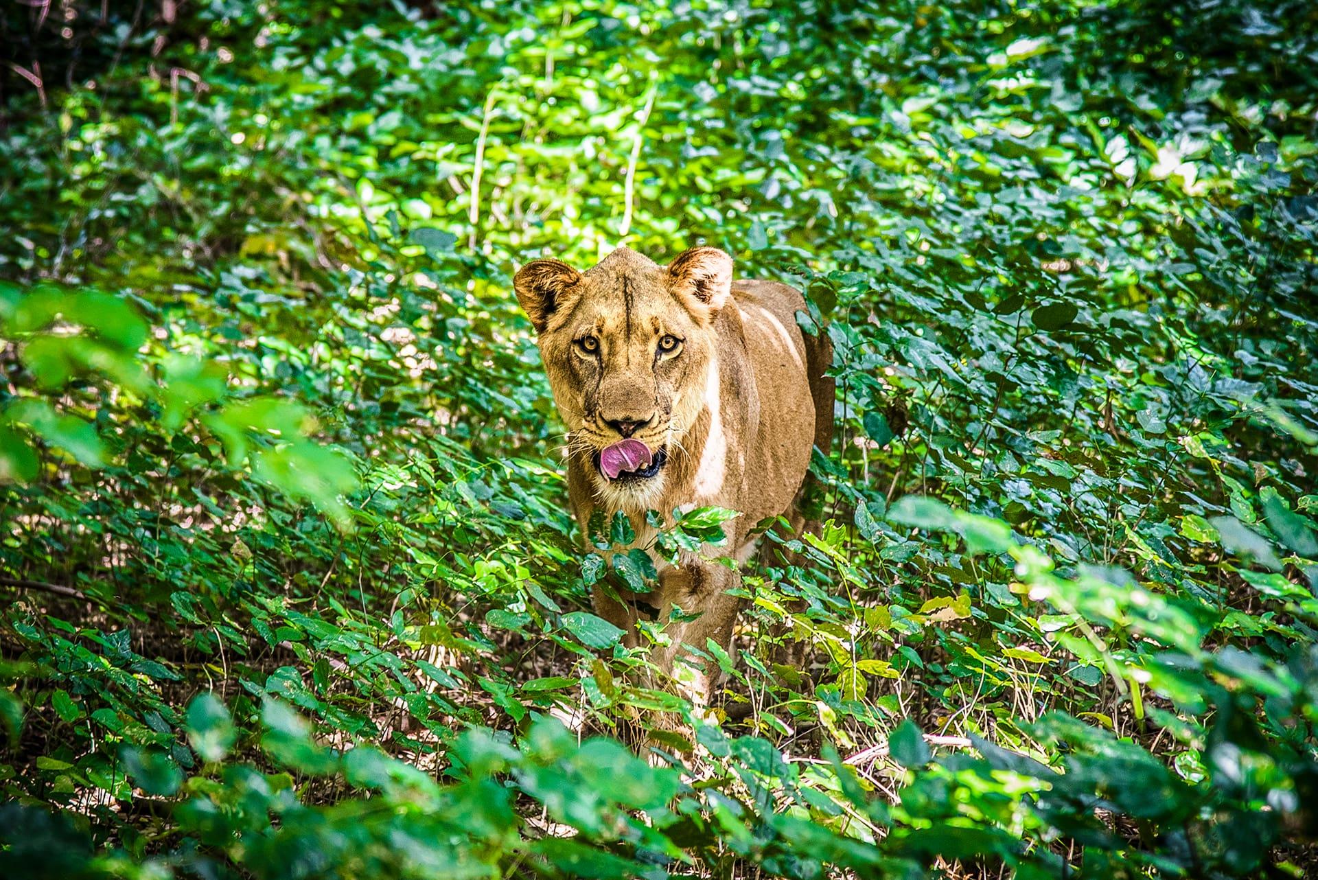 En promenade au Parc Animalier Casela- Le duo de choc ! L'île Maurice et l'île de la Réunion - Suivre sa Joie - Saskia Parein