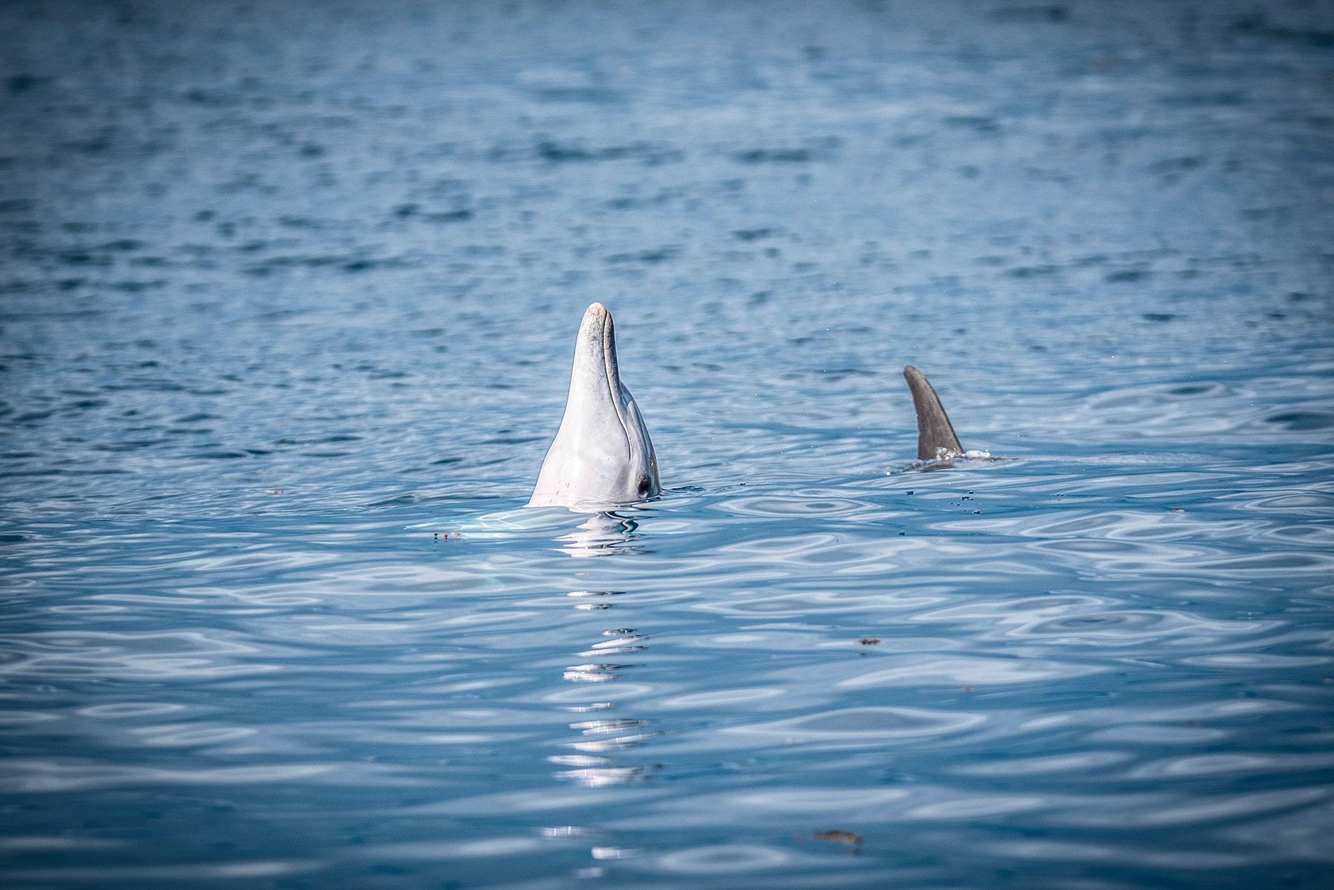 Les dauphins - Le duo de choc ! L'île Maurice et l'île de la Réunion - Suivre sa Joie - Saskia Parein