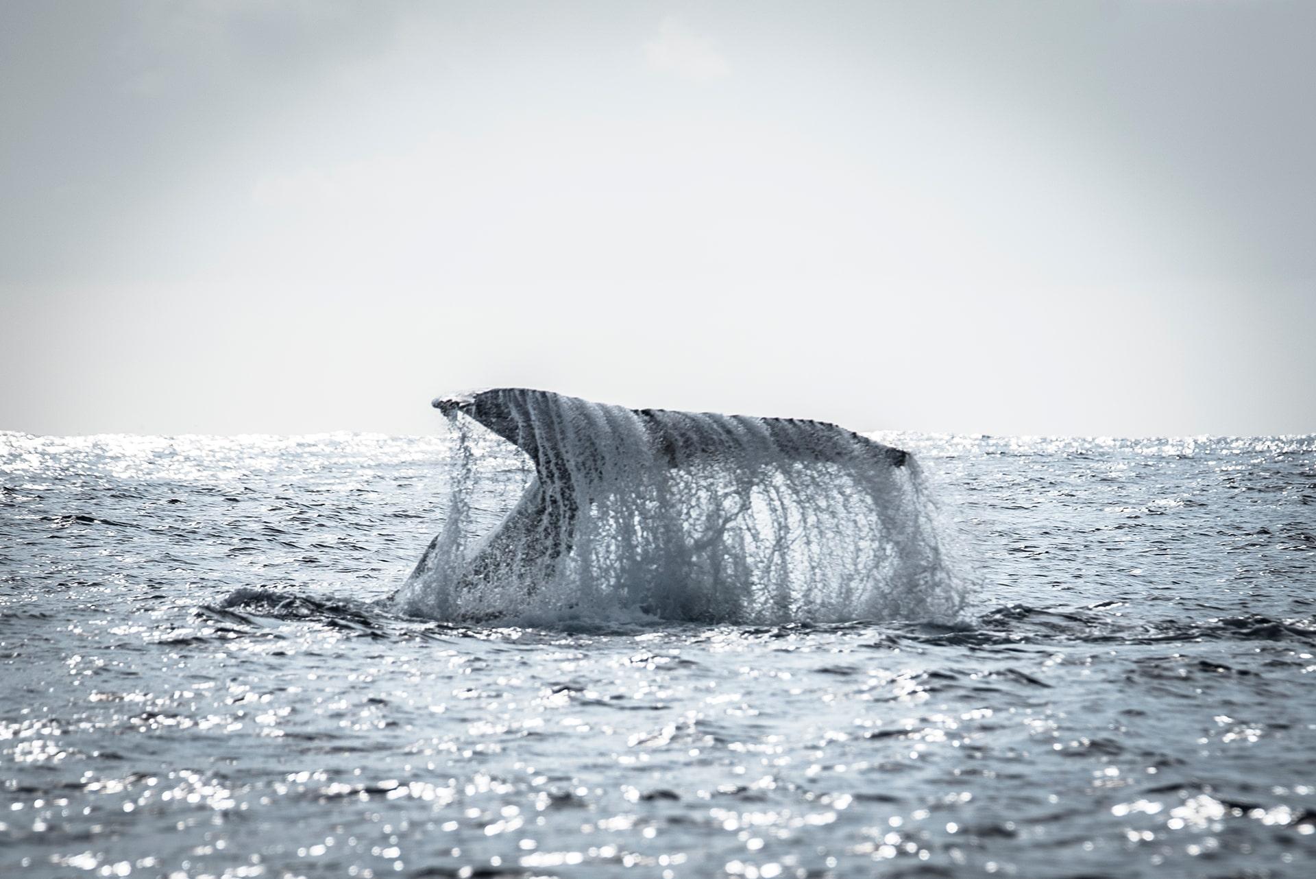 Une famille baleine - Le duo de choc ! L'île Maurice et l'île de la Réunion - Suivre sa Joie - Saskia Parein