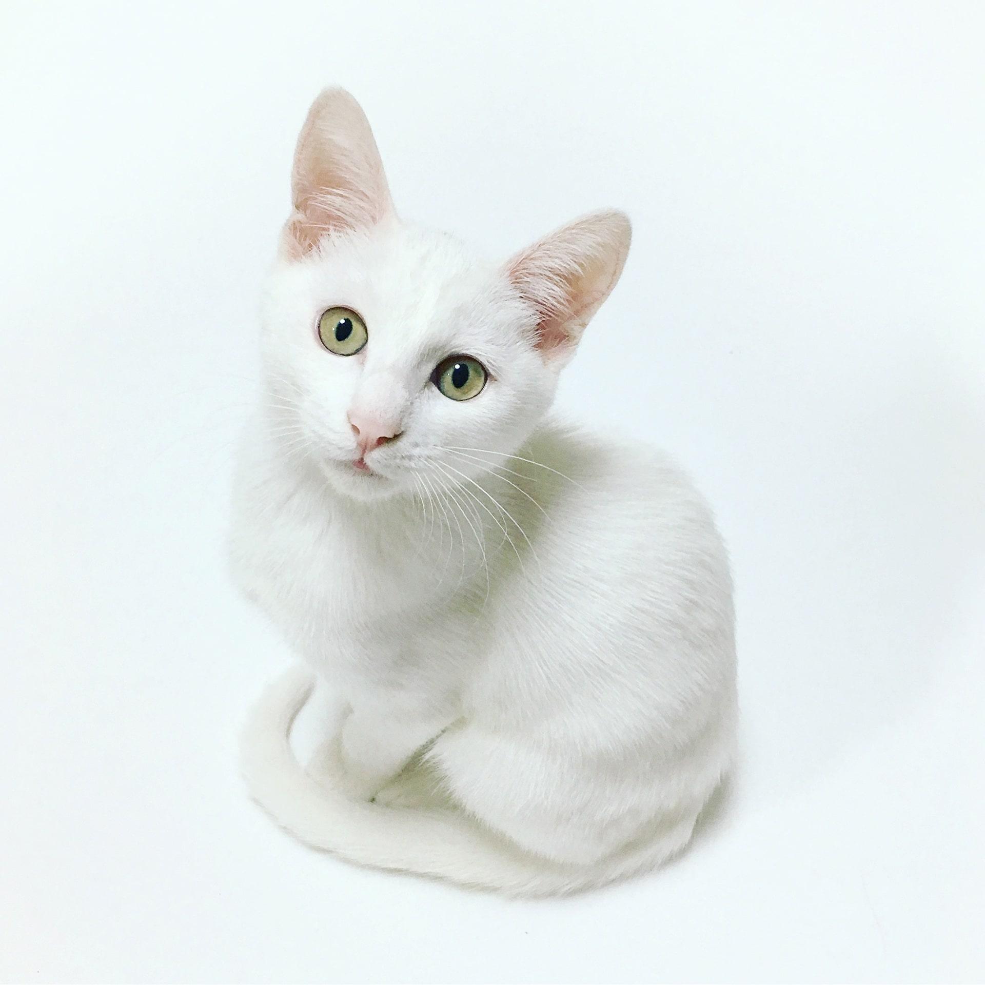 Suites des Communications Animales - Quand l'animal apprécie son nom - Suivre sa Joie - Saskia Parein