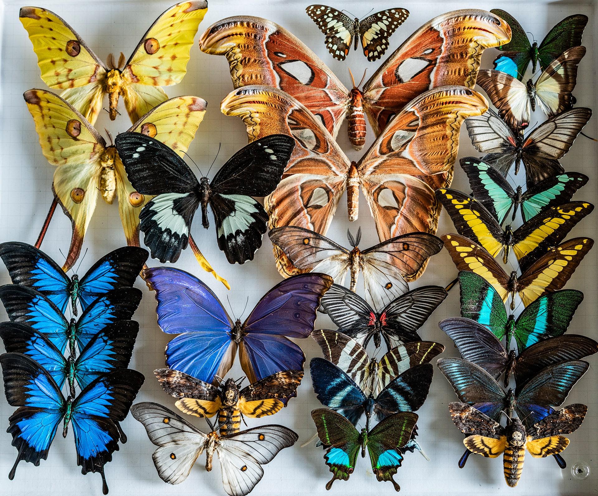 Blog Lifestyle - Quelques espèces animales naturalisées - Suivre sa Joie - Saskia Parein