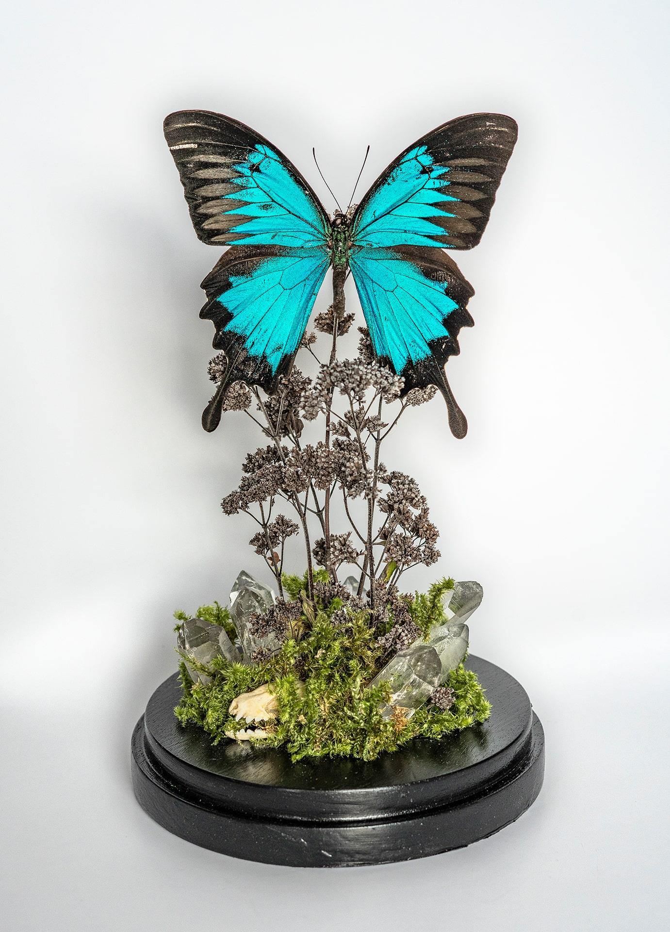 Blog Lifestyle - Que fait-on des insectes empaillés ? - Suivre sa Joie - Saskia Parein