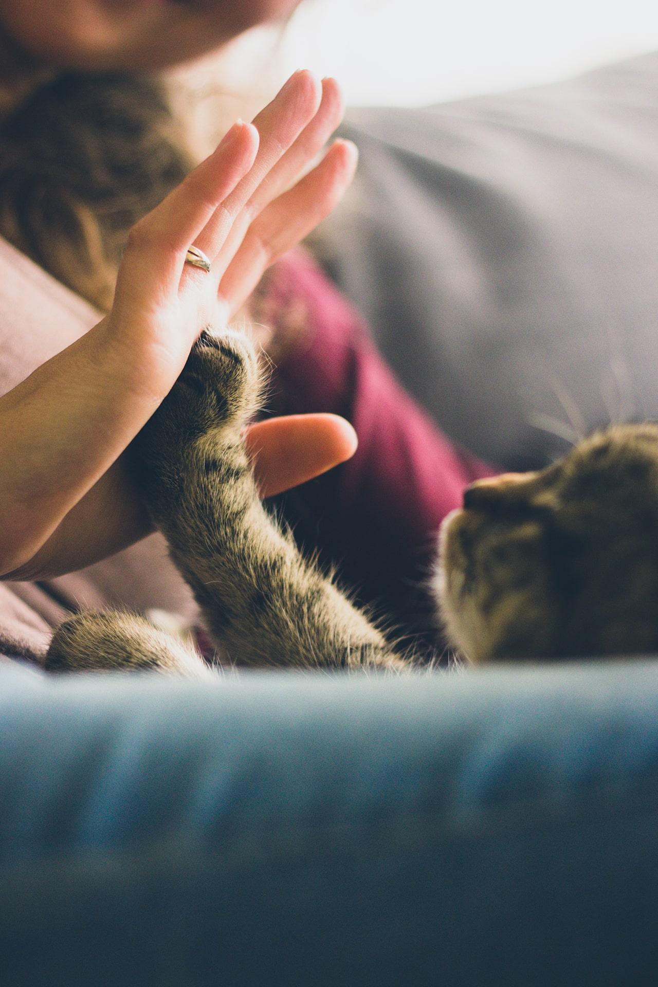 Blog Développement Personnel - Une rencontre évidente avec un animal - Suivre sa Joie - Saskia Parein